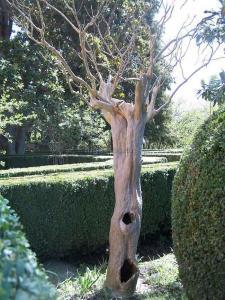 jardin-romantico-niguelas00009